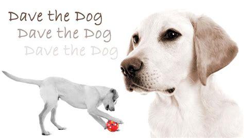 dave s dogs family photoshoot northton and family photoshoot wellingborough