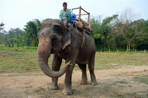 le elefant nepal chitwan 2 dschungelsafaris und rhinozerosse