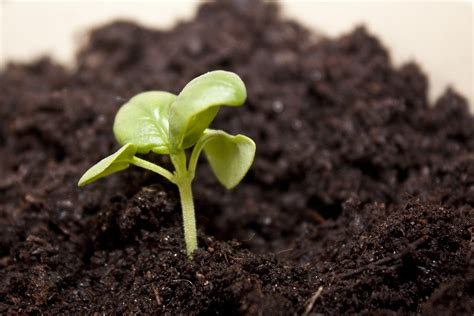 how to plant pumpkin seeds 10 steps with pictures wikihow