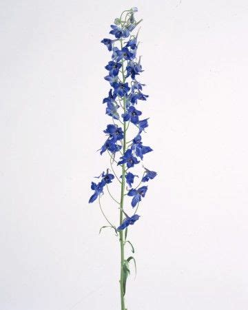 delphinium tattoo delphinium crafts gardening and flowers