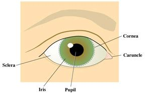 what is the colored part of the eye called exitcare image