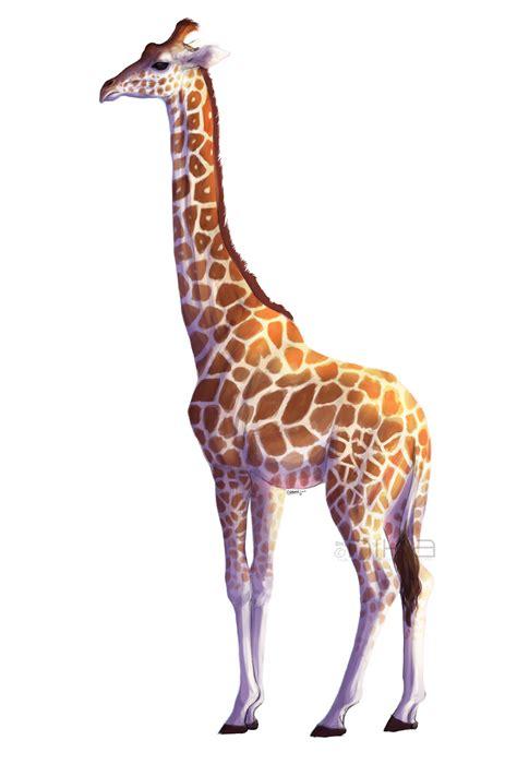 giraffe by kalambo on deviantart