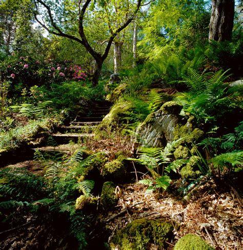 woodlands backyard low maintenance outdoors woodland garden outdoortheme com