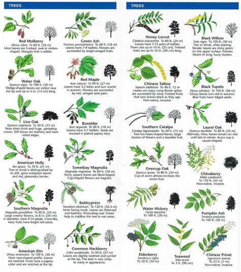 tree species guide species identification woodlands conservancy