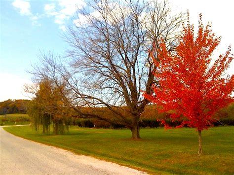 planting fruit trees in fall fruit tree care fall planting stark bro s