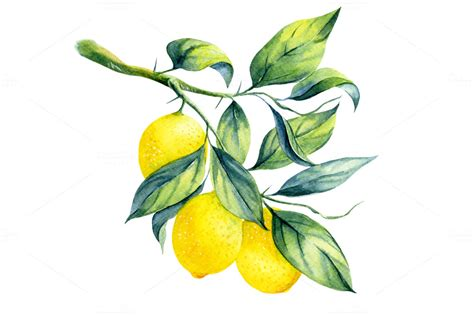 Watercolor lemon branch ~ Illustrations on Creative Market