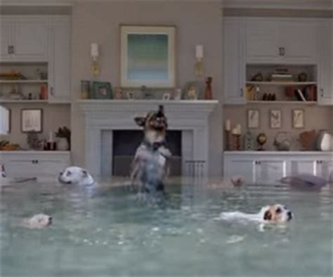 Farmers Insurance Flooded House Dog Diving Competition Commercial 2016 Mer Mutts
