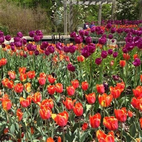 Botanical Gardens Maryland Brookside Gardens Tulips Wheaton Md United States