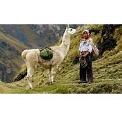 Experience Llama Trekking With Libertador Hotels &amp Resorts