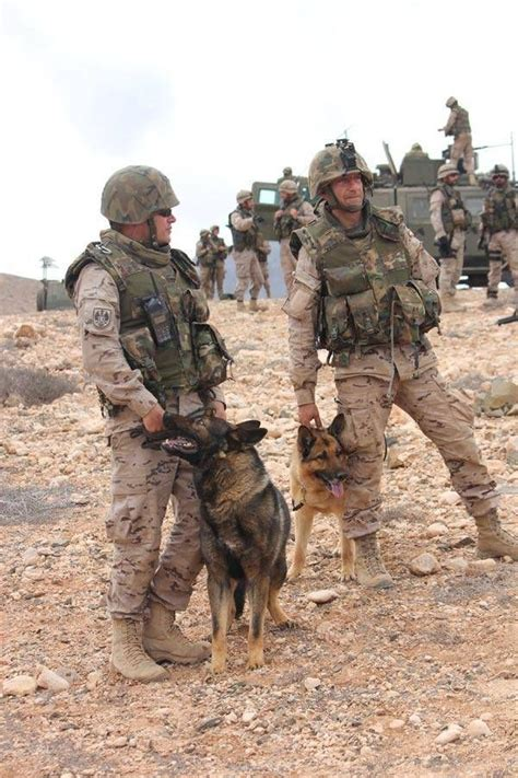 war dogs war pawsitively wonderful