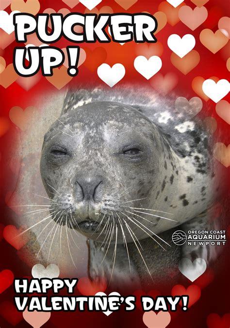 happy valentines day animals 36 best its so im gonna die images on