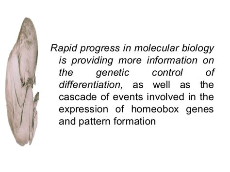 homeotic pattern formation anomalies in development of face pre and post certified