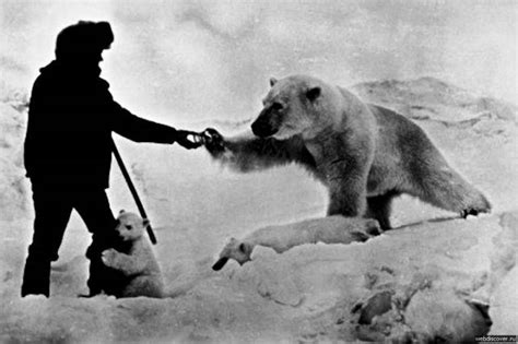 the polar bear explorers you won t believe polar explorers could get that close to polar bears 4 pics izismile com
