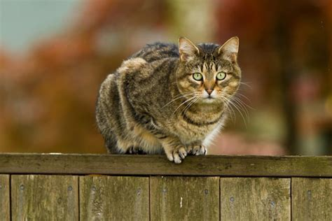 Cat On by Will A Cat Fence Keep Cats Out Of Your Garden The
