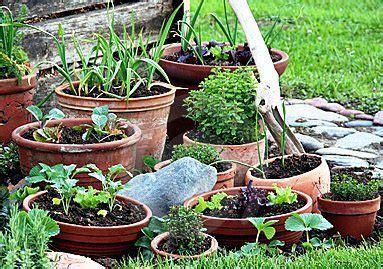container vegetable gardens growing  pots indoor
