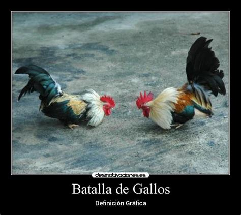 distinctive house design and decor of the twenties frases de batalha de gallos 1000 images about gallos on
