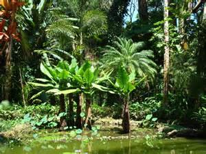 Hawaii Botanical Garden 30 Hawaii Mowryjournal