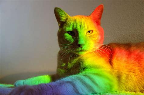 Rainbow Cat Meme - rainbow cat cats know your meme