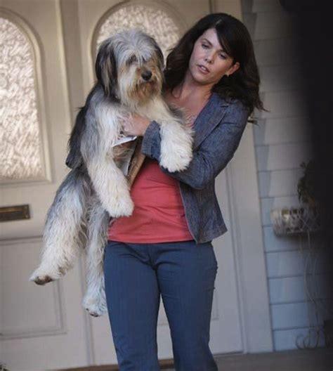 paul anka puppy paul anka gilmore tv s cutest pets zimbio