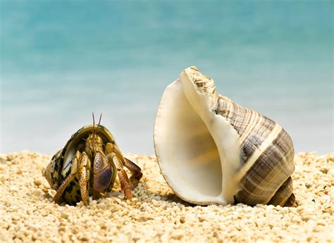 Bathroom Ideas For Small Spaces What To Do If Your Hermit Crab Is Without His Shell