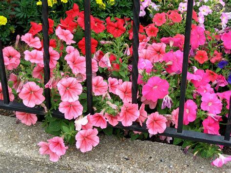 giardino fiorito tutto l anno piante da ombra guida completa per un giardino fiorito