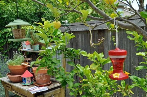 Backyard Bird Sanctuary Ideas How To Attract And Feed Birds In Your Home Backyard How To Build A House