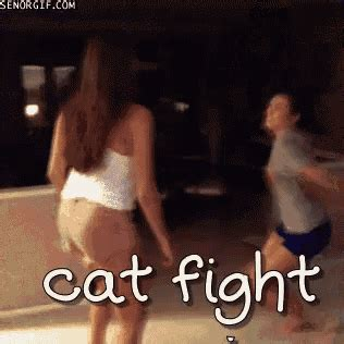 7 Ways To Stop A Cat Fight by Cat Fight Gif Catfight Discover Gifs