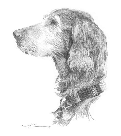 setter dog drawing irish setter dog pencil portrait drawing by mike theuer