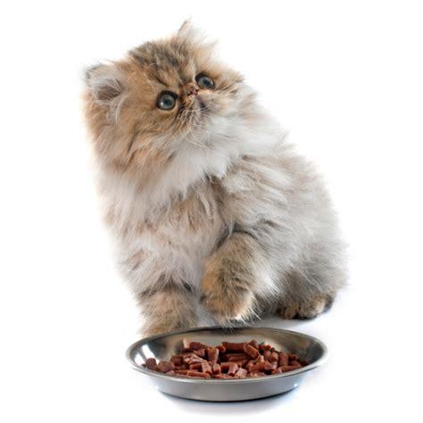 gatti alimentazione alimentazione gatti pagina 2 di 6 tutto ze