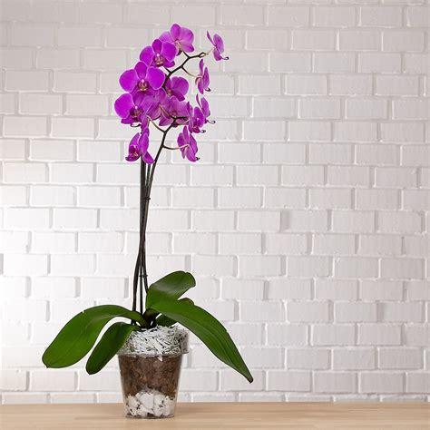 vaso per orchidea trasparente vendita