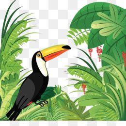 burung enggang  gratis desktop wallpaper toucan