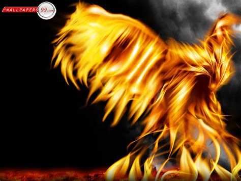 cool vire wallpaper cool fire wallpapers hd wallpapers pics