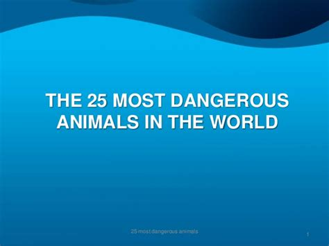 top 25 most dangerous animals in the world pouted online the 25 most dangerous animals on the planet
