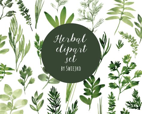 Digital Clipart, Watercolor Herbs, Hand Painted Leaves