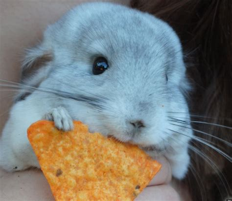 31 cute animals that will fill your heart with joy photos