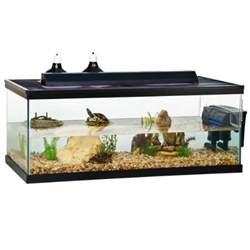 Reptile Habitat Decor 55 Gallon Turtle Tank Quotes