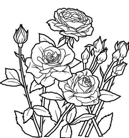 gambar desain bunga gambar kumpulan gambar bunga indah animasi sketsa mawar 2