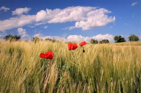 fiori italia sfondi fiori italia panorama naturaleza natura