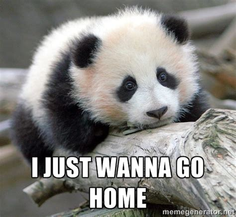 Sad Panda Meme Generator - i just wanna go home sad panda meme generator home