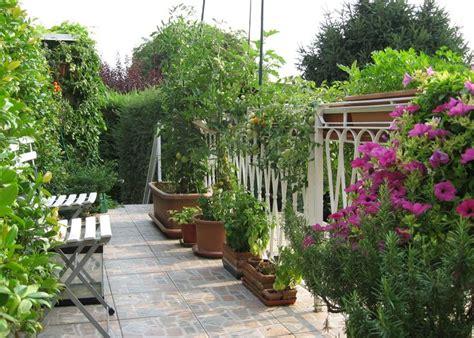 pomodori ciliegini in vaso 17 migliori idee su giardino di pomodori su
