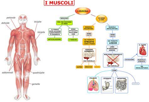 alimentazione per fare muscoli muscoli