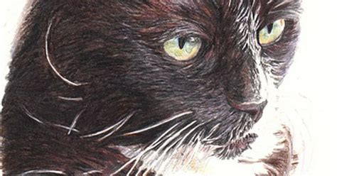 Cat Poster Faber Castell Poster Colour Per 12 Set boots the cat created using faber castell albrecht durer