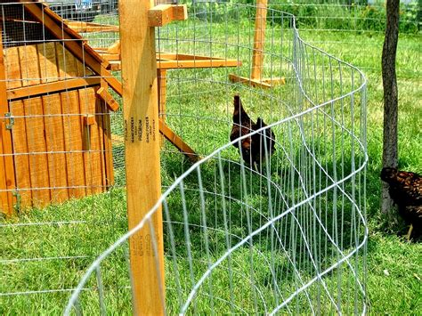 movable chicken fence on sale portable chicken fence kit for free range chicken coop claz org