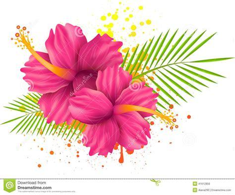 imagenes de rosas vectorizadas flores del hibisco en fondo del grunge ilustraci 243 n del