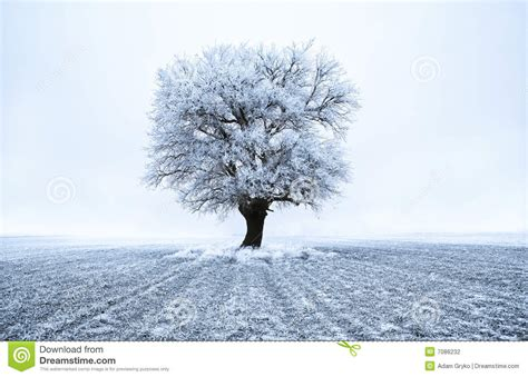 Frozen Tree Stock Photography   Image: 7086232