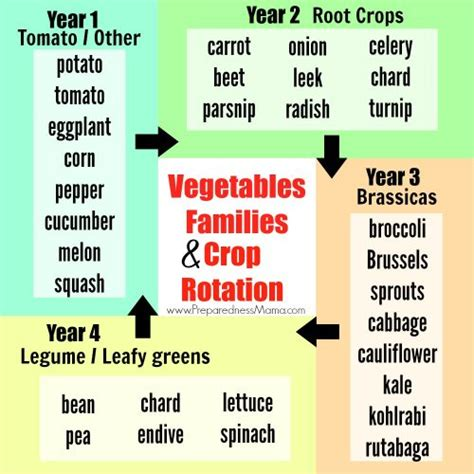 vegetable garden rotation vegetable families and crop rotation preparednessmama