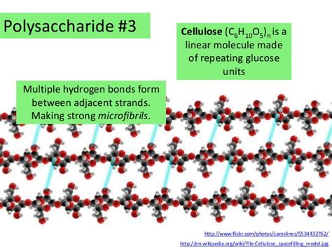 3 2 carbohydrates lipids and proteins ib biology 3 2 carbohydrates lipids and proteins