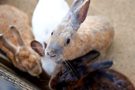 lettiere per conigli la so le est lettiere in pino e abete per conigli