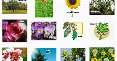 Tanaman Hias Anthurium Merah Lokal tanaman hias daftar nama tanaman