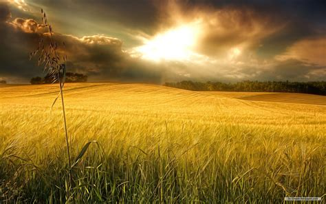 download themes of nature for pc free wallpaper free nature wallpaper windows 7 themes